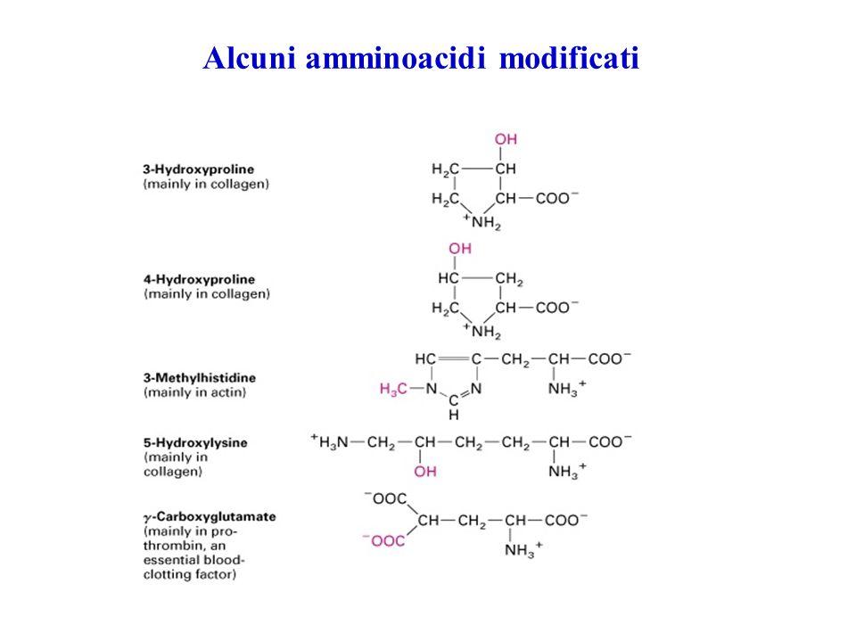Alcuni amminoacidi modificati