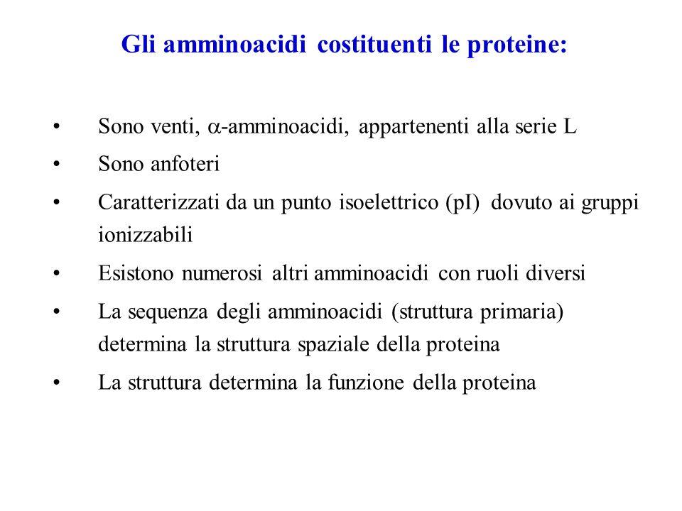 Gli amminoacidi costituenti le proteine: