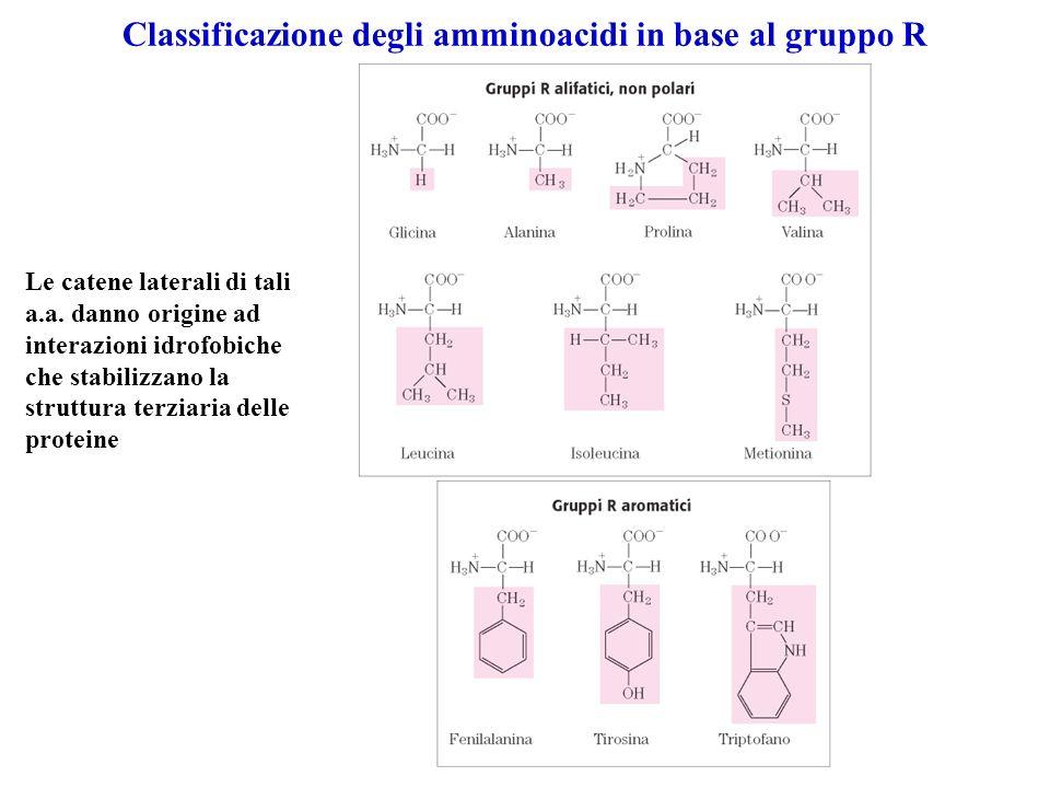 Classificazione degli amminoacidi in base al gruppo R