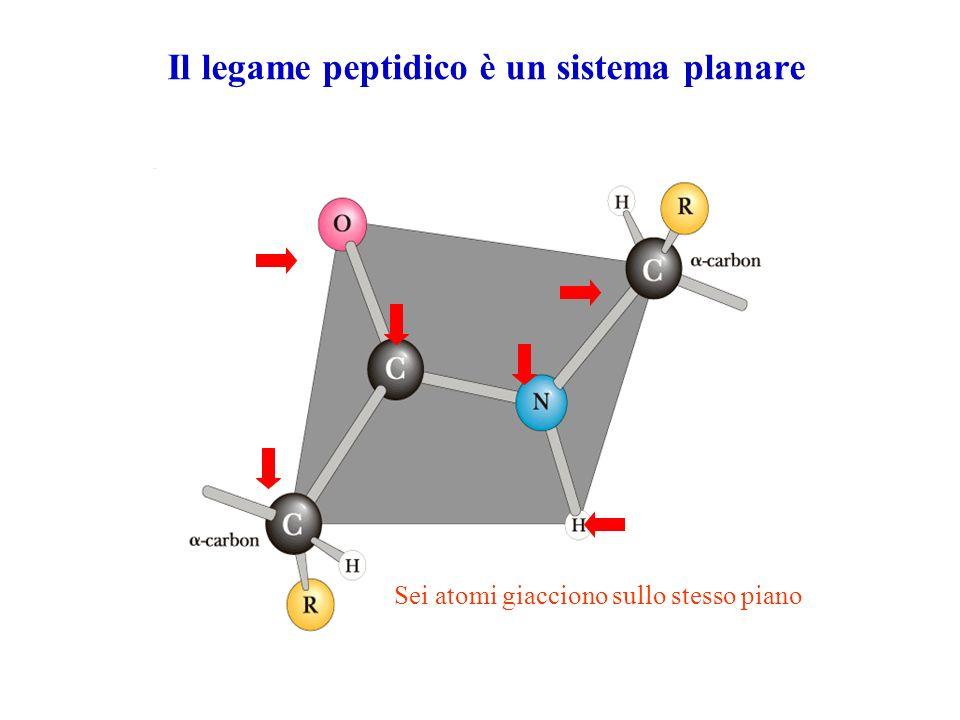 Il legame peptidico è un sistema planare