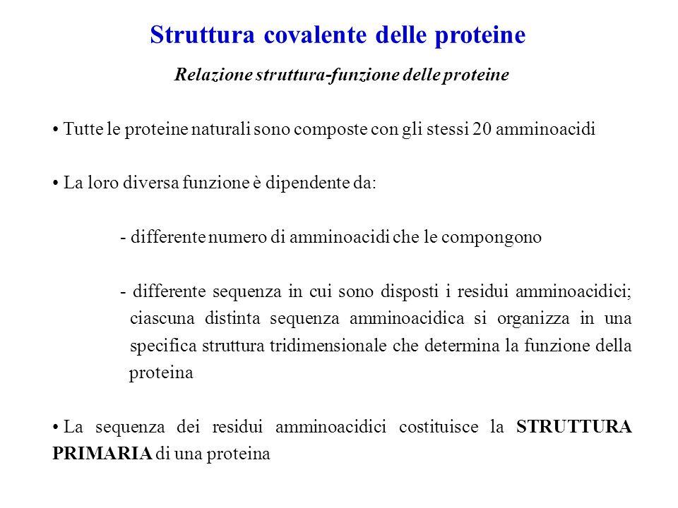 Struttura covalente delle proteine