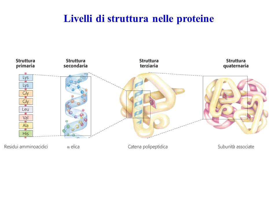 Livelli di struttura nelle proteine