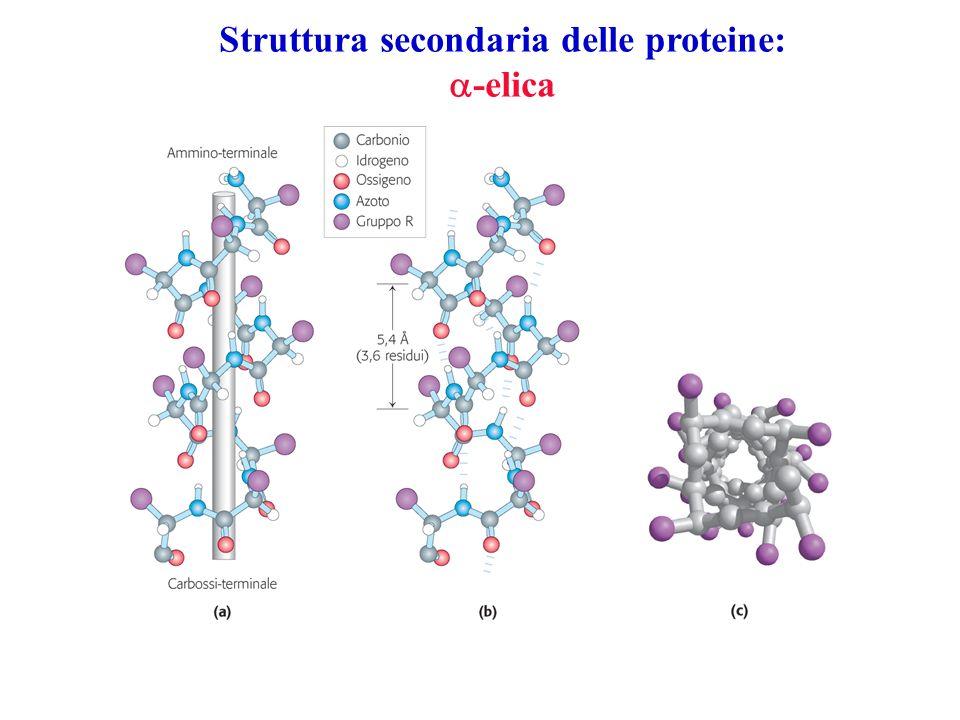 Struttura secondaria delle proteine:
