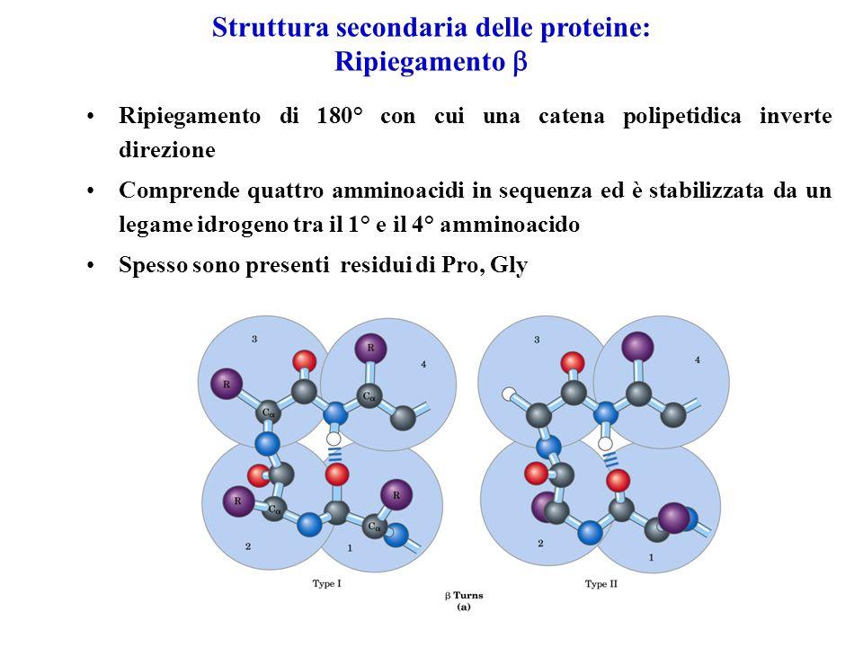 Struttura secondaria delle proteine: Ripiegamento 