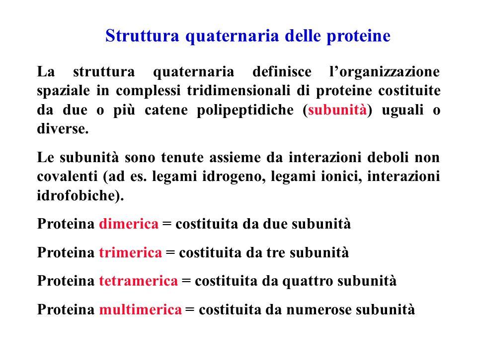 Struttura quaternaria delle proteine