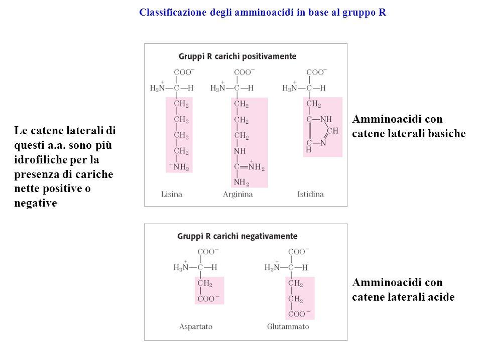 Amminoacidi con catene laterali basiche