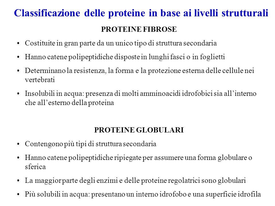 Classificazione delle proteine in base ai livelli strutturali
