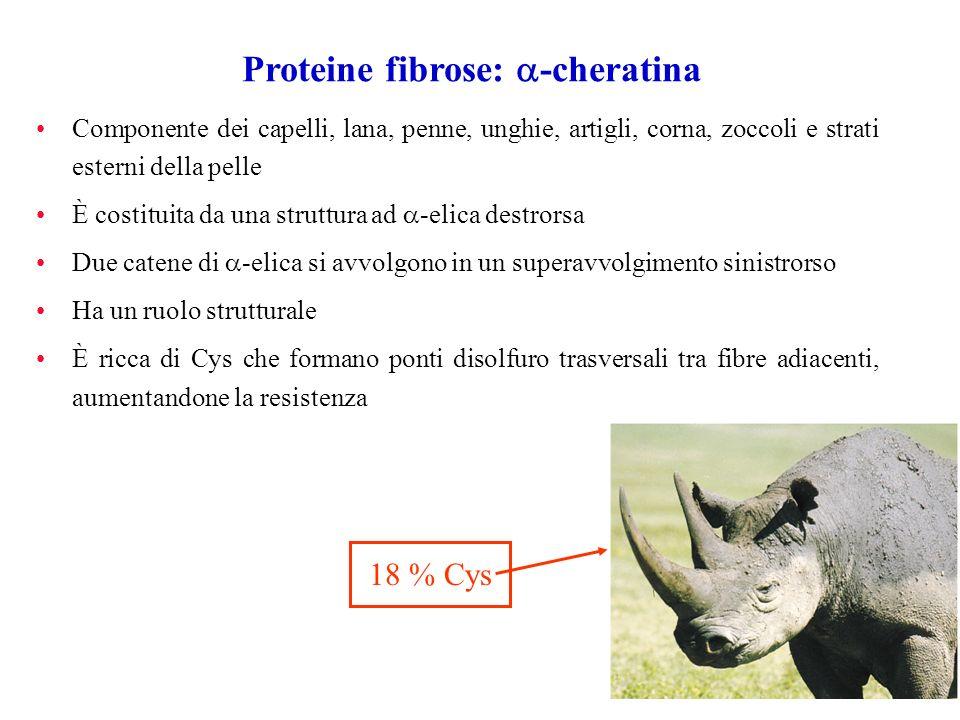 Proteine fibrose: a-cheratina