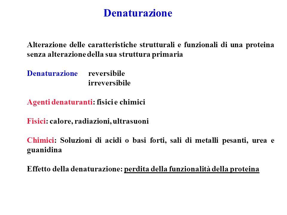 DenaturazioneAlterazione delle caratteristiche strutturali e funzionali di una proteina senza alterazione della sua struttura primaria.