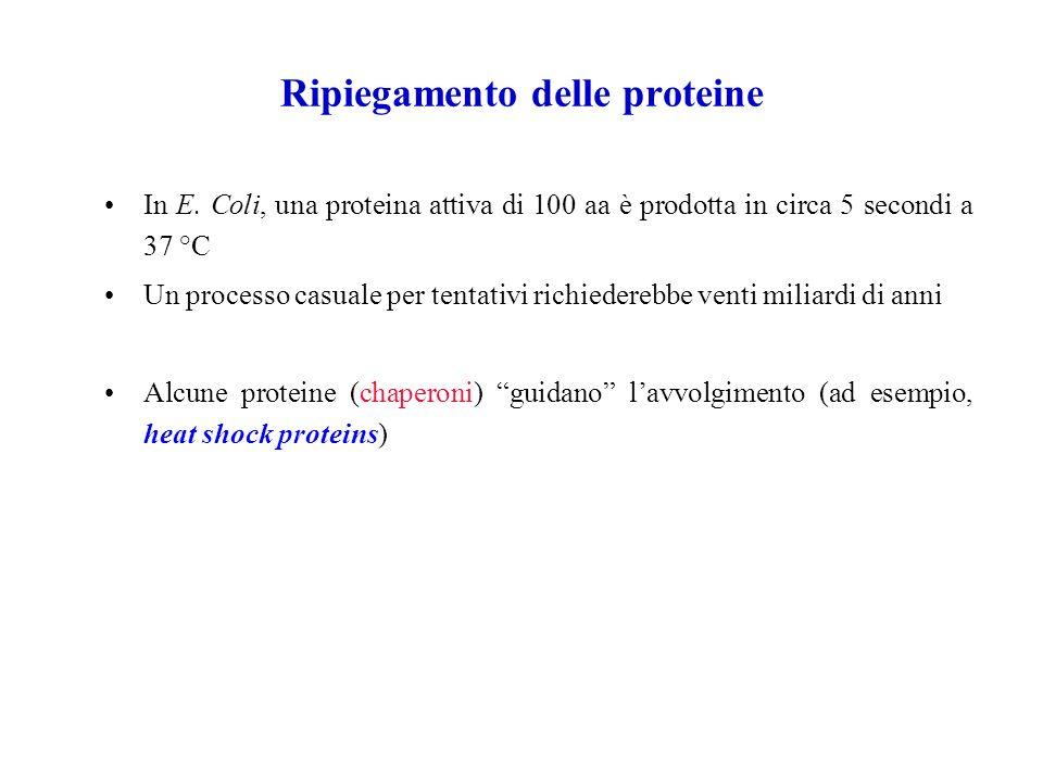 Ripiegamento delle proteine