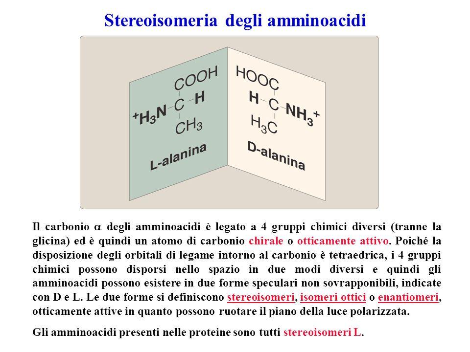 Stereoisomeria degli amminoacidi
