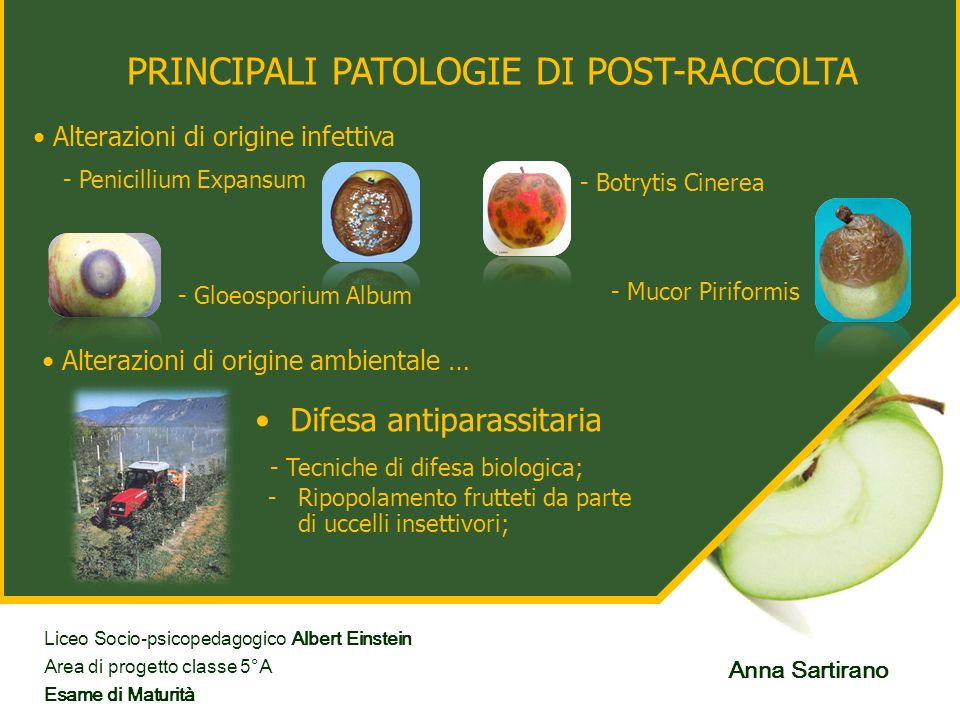 PRINCIPALI PATOLOGIE DI POST-RACCOLTA