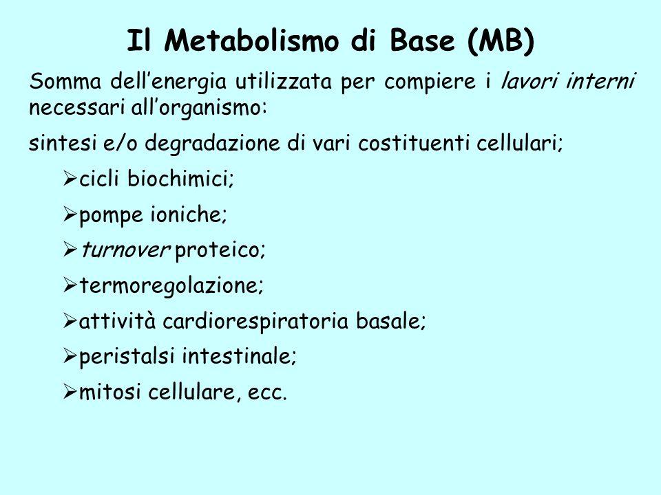 Il Metabolismo di Base (MB)