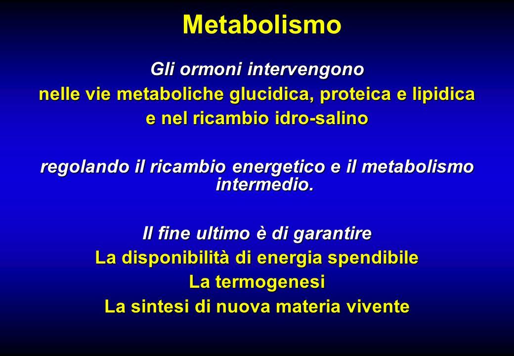 Metabolismo Gli ormoni intervengono