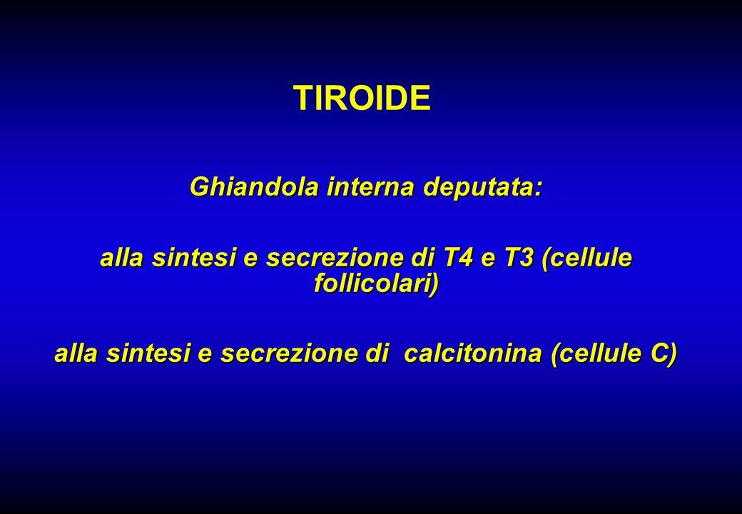 TIROIDE Ghiandola interna deputata: