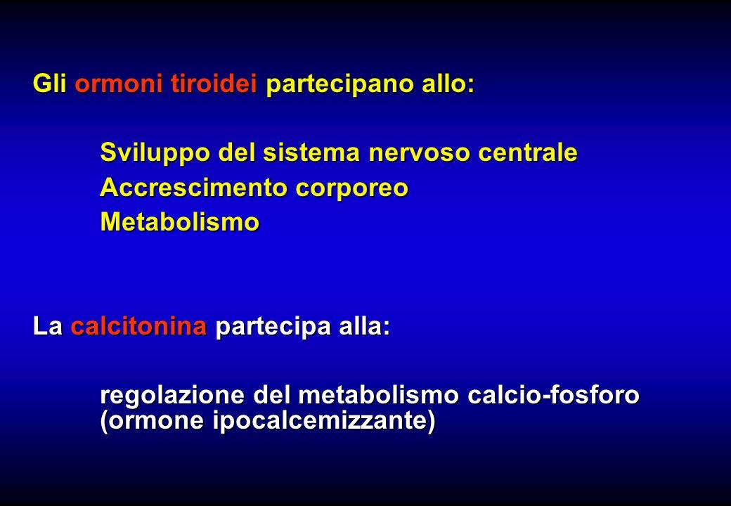 Gli ormoni tiroidei partecipano allo: