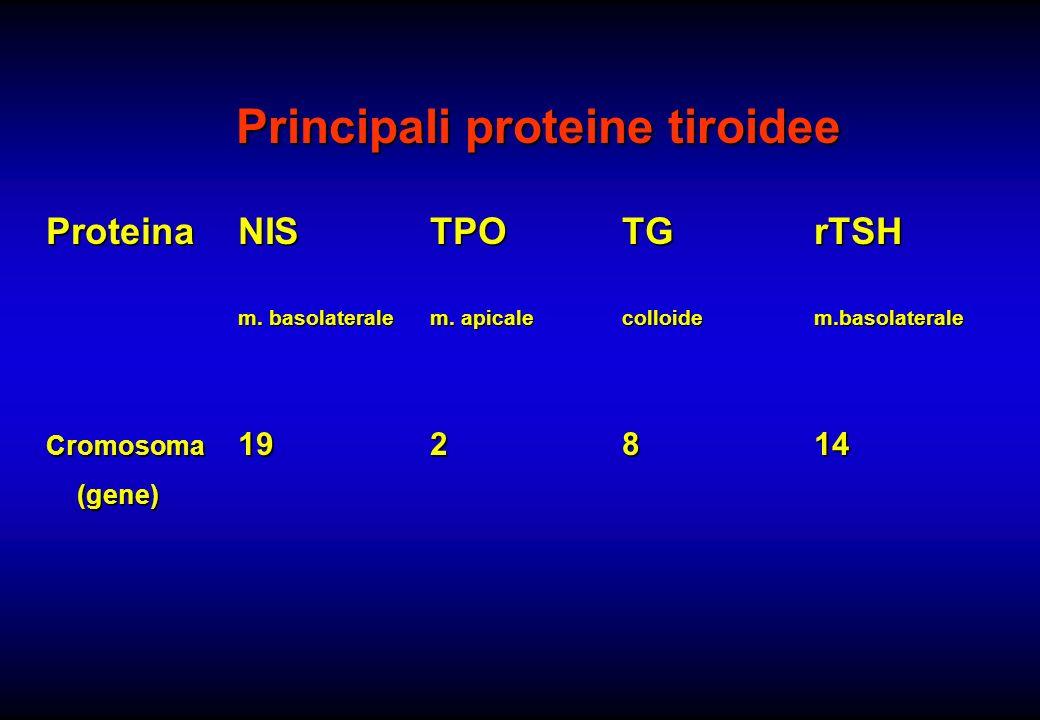 Principali proteine tiroidee