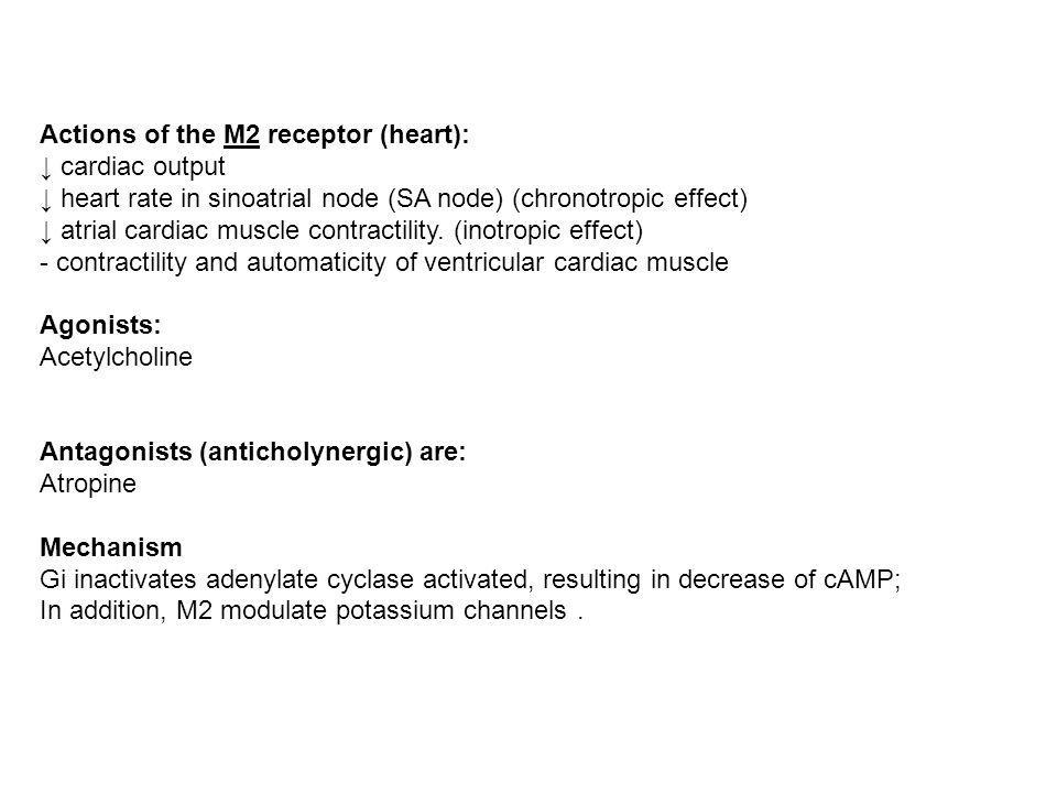 Actions of the M2 receptor (heart):