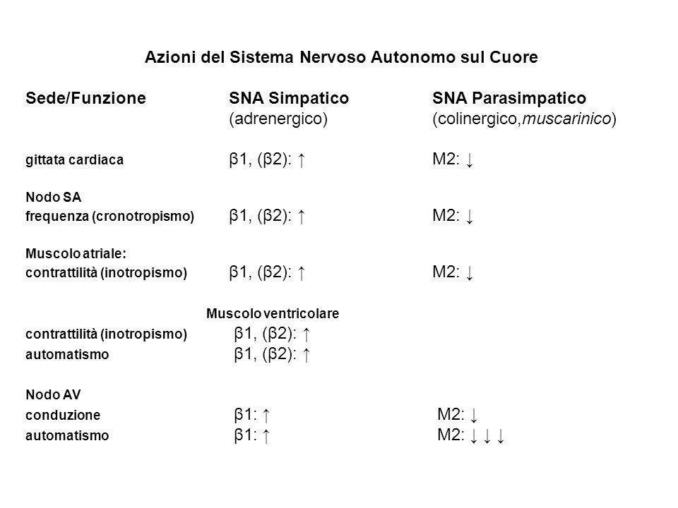 Azioni del Sistema Nervoso Autonomo sul Cuore