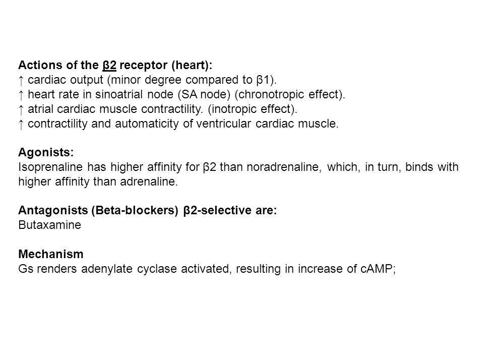Actions of the β2 receptor (heart):