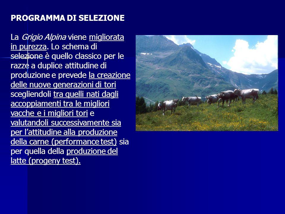 PROGRAMMA DI SELEZIONE
