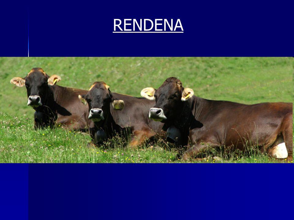 RENDENA