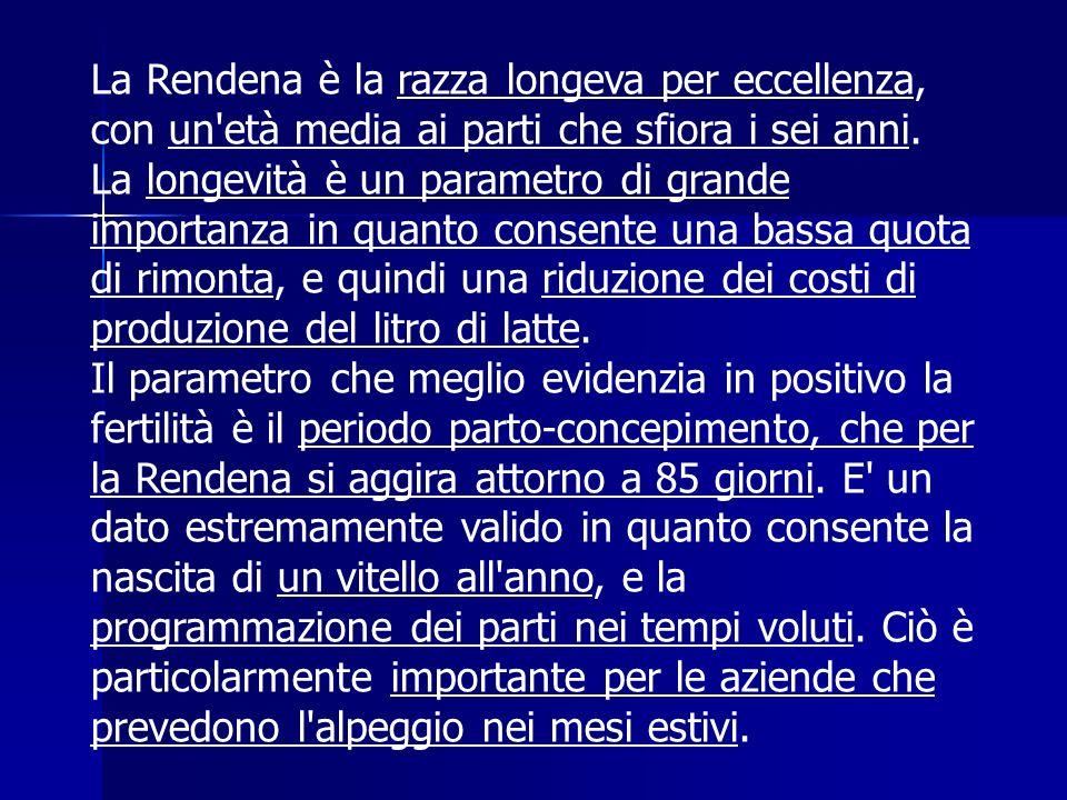 La Rendena è la razza longeva per eccellenza, con un età media ai parti che sfiora i sei anni.