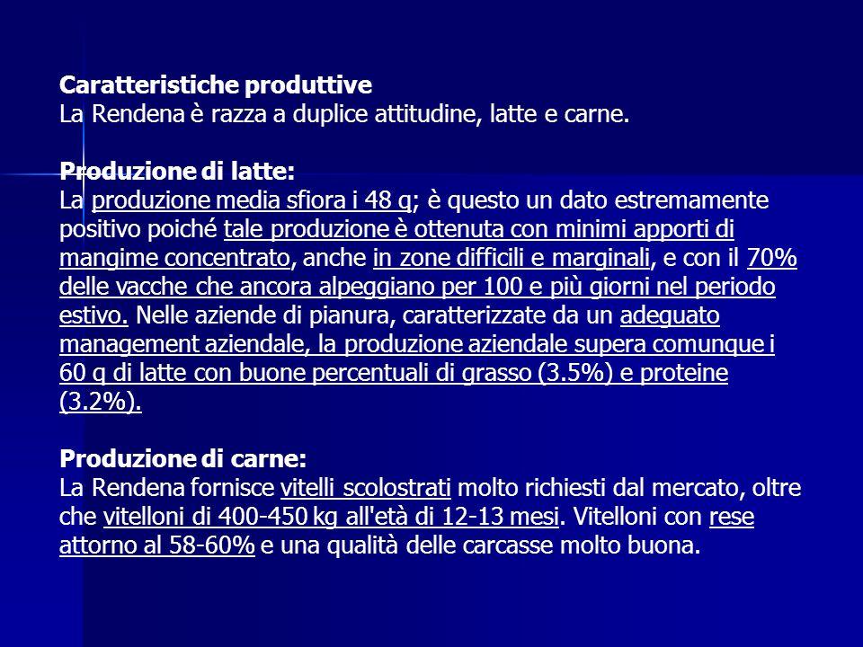 Caratteristiche produttive La Rendena è razza a duplice attitudine, latte e carne. Produzione di latte: