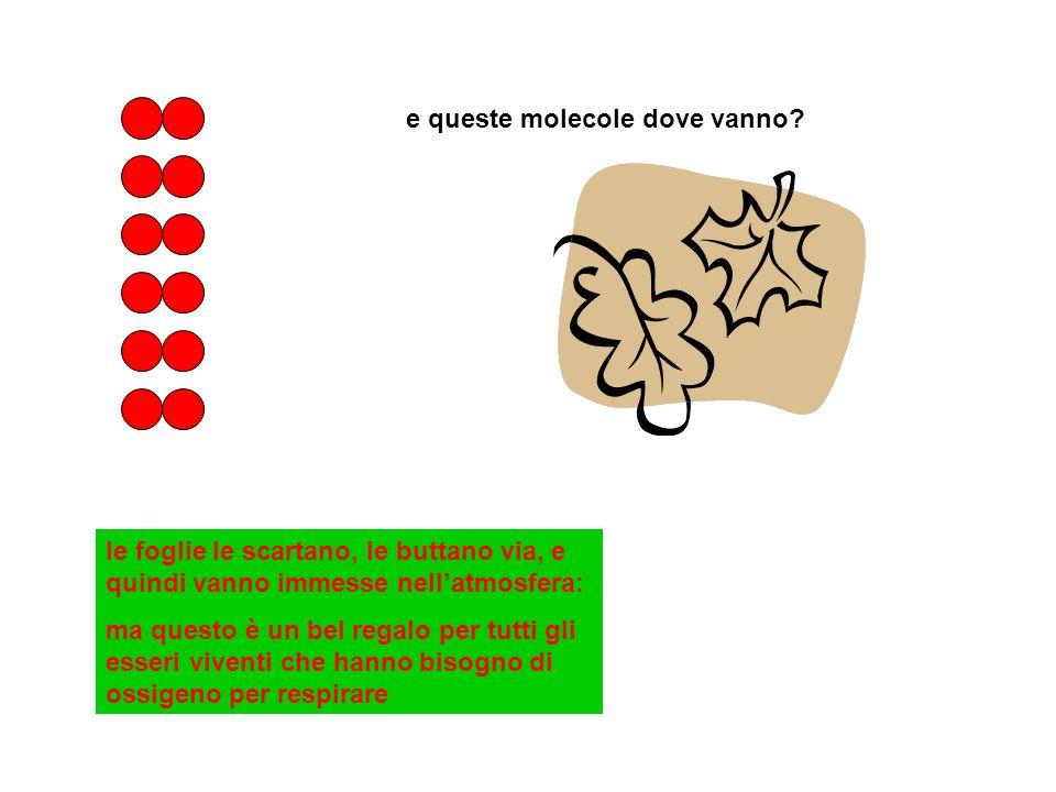 e queste molecole dove vanno