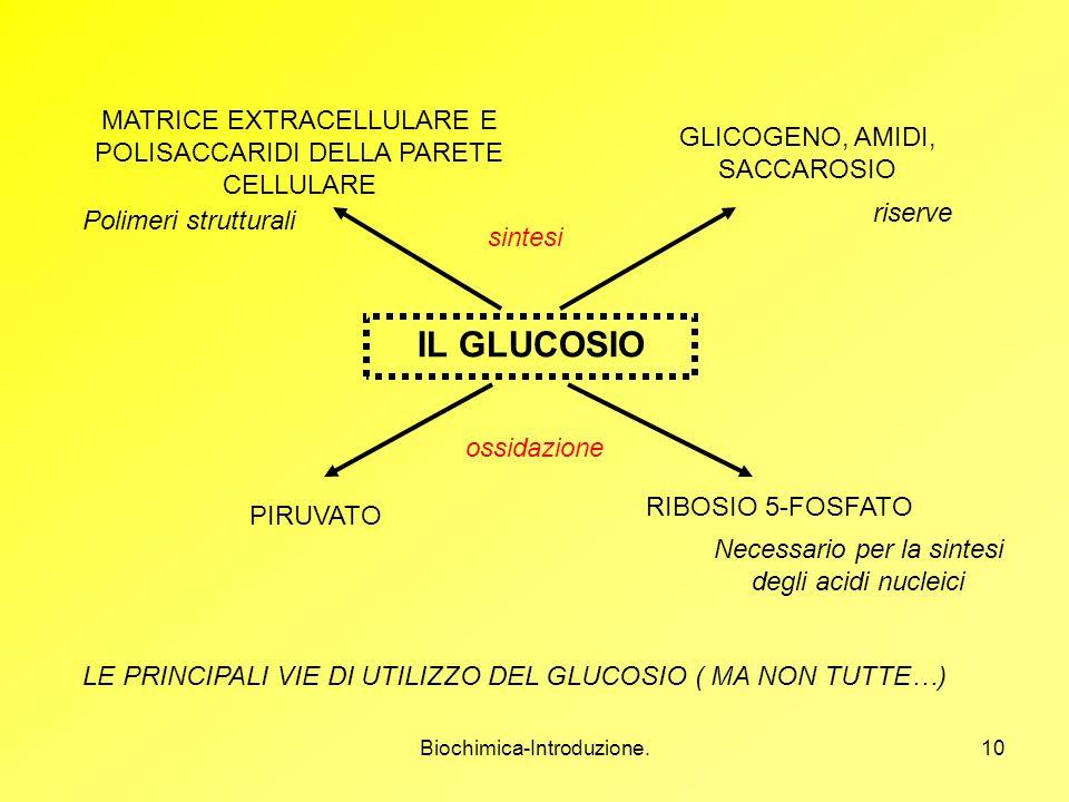 MATRICE EXTRACELLULARE E POLISACCARIDI DELLA PARETE CELLULARE