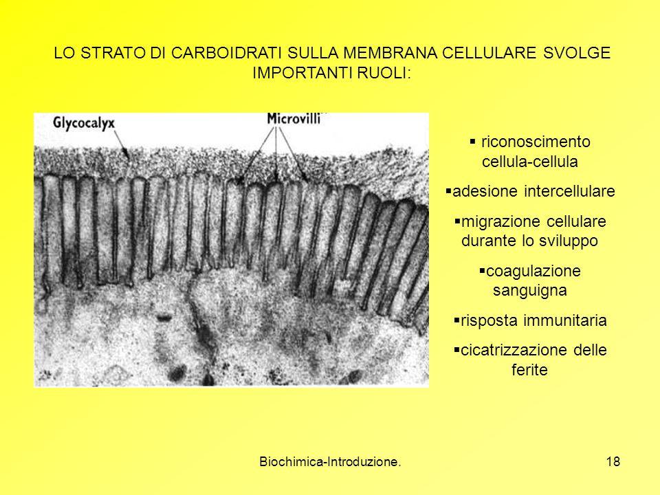 riconoscimento cellula-cellula adesione intercellulare