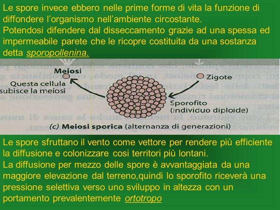 Le spore invece ebbero nelle prime forme di vita la funzione di diffondere l'organismo nell'ambiente circostante.