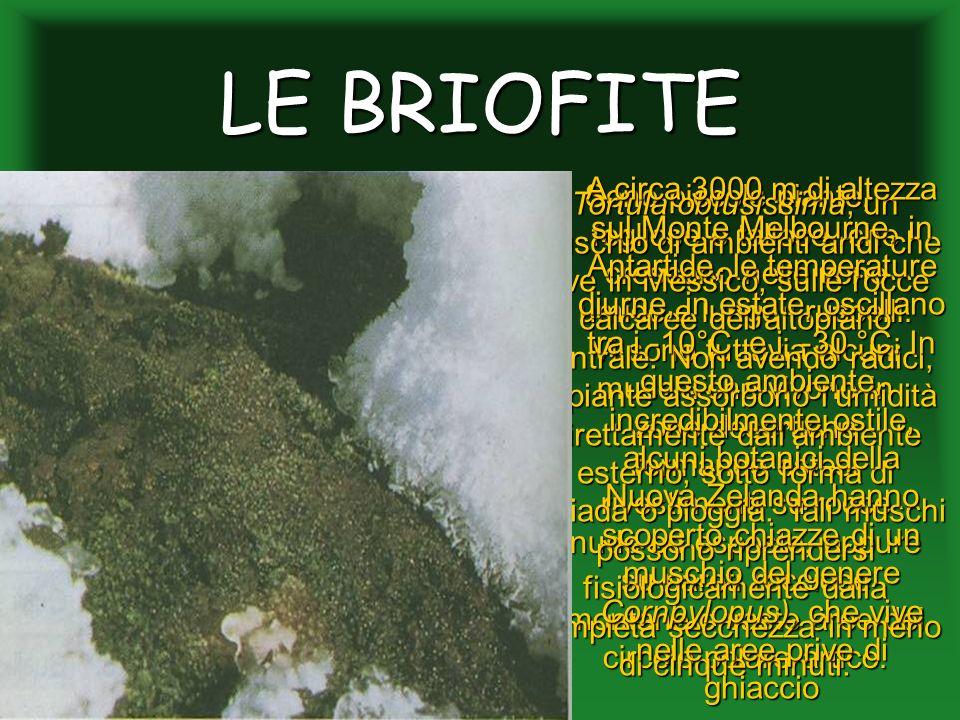 LE BRIOFITE