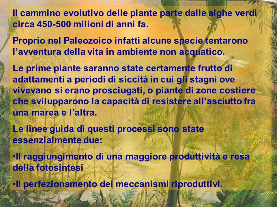 Il cammino evolutivo delle piante parte dalle alghe verdi circa 450-500 milioni di anni fa.