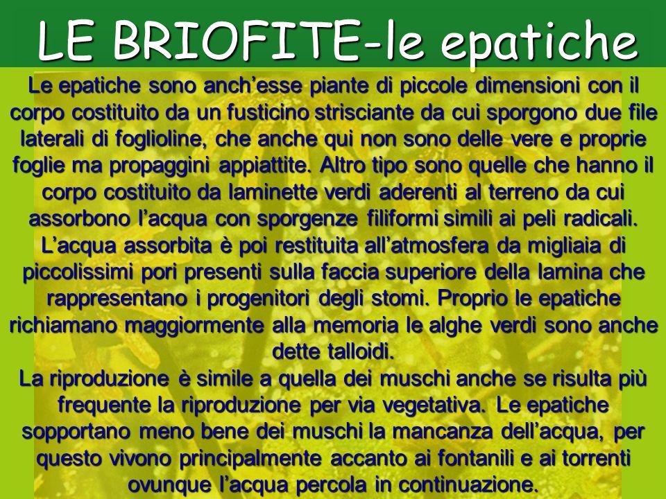 LE BRIOFITE-le epatiche