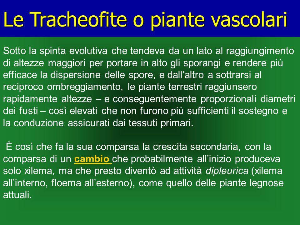Le Tracheofite o piante vascolari