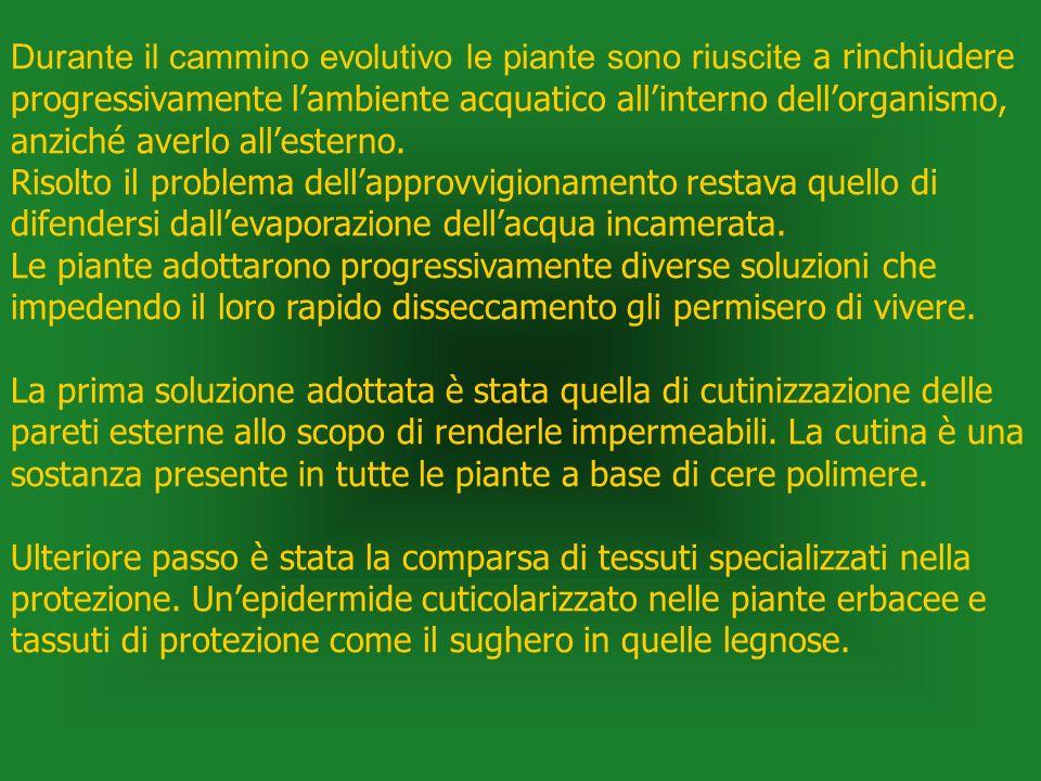 Durante il cammino evolutivo le piante sono riuscite a rinchiudere progressivamente l'ambiente acquatico all'interno dell'organismo, anziché averlo all'esterno.