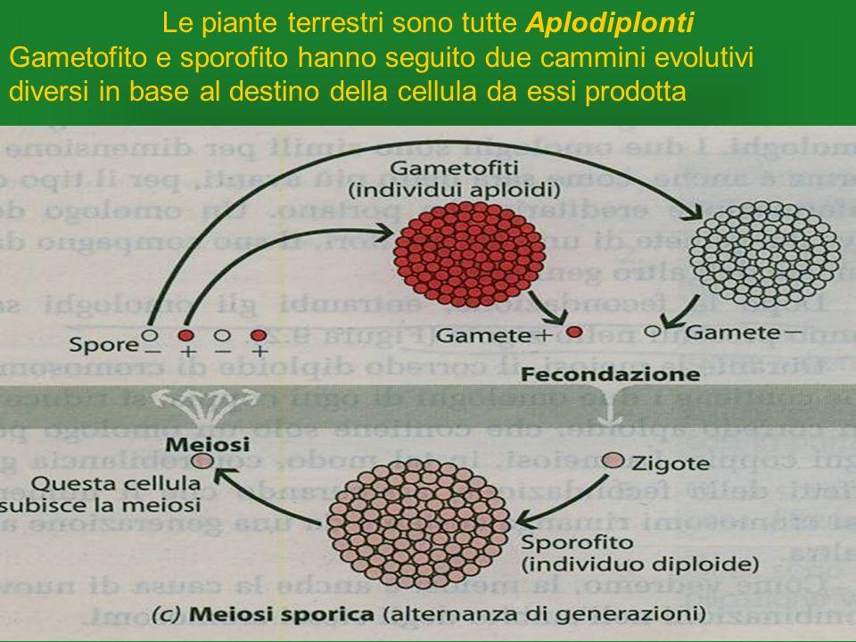 Le piante terrestri sono tutte Aplodiplonti