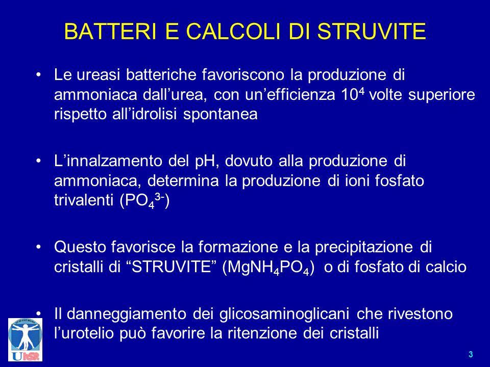 BATTERI E CALCOLI DI STRUVITE