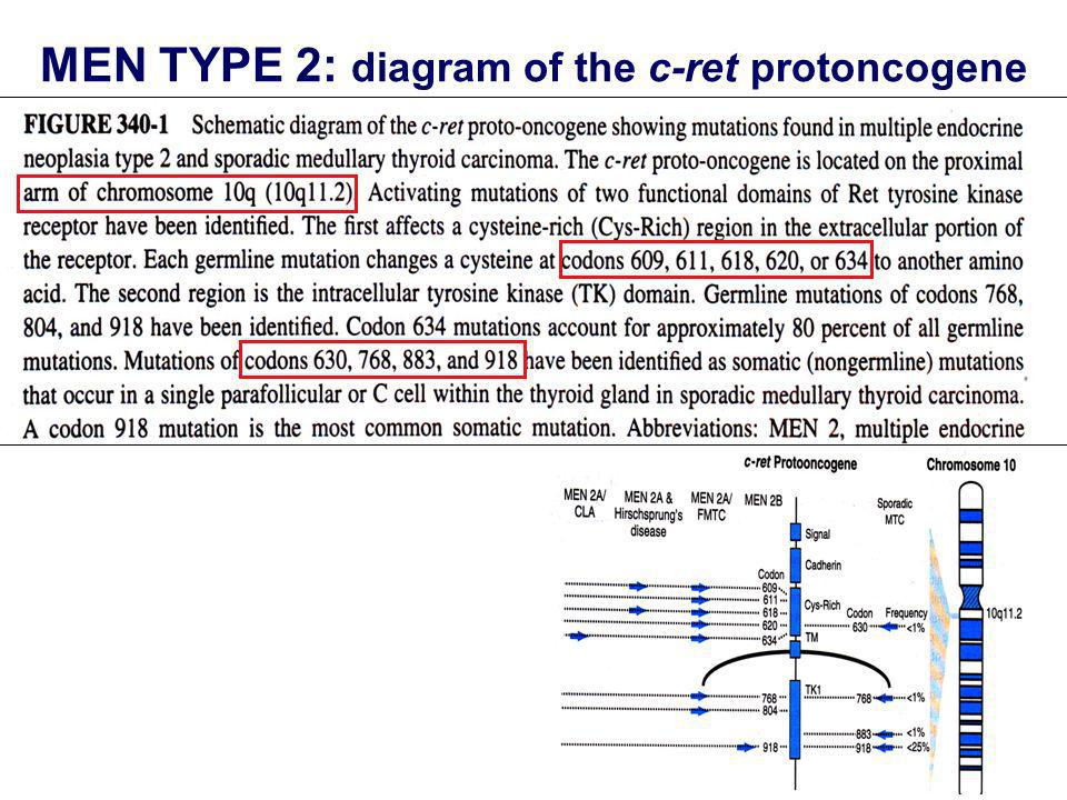 MEN TYPE 2: diagram of the c-ret protoncogene