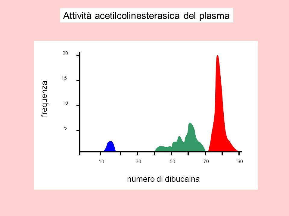 Attività acetilcolinesterasica del plasma