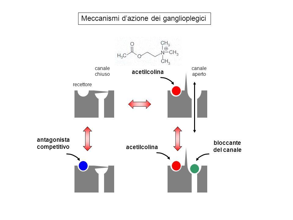 Meccanismi d'azione dei ganglioplegici