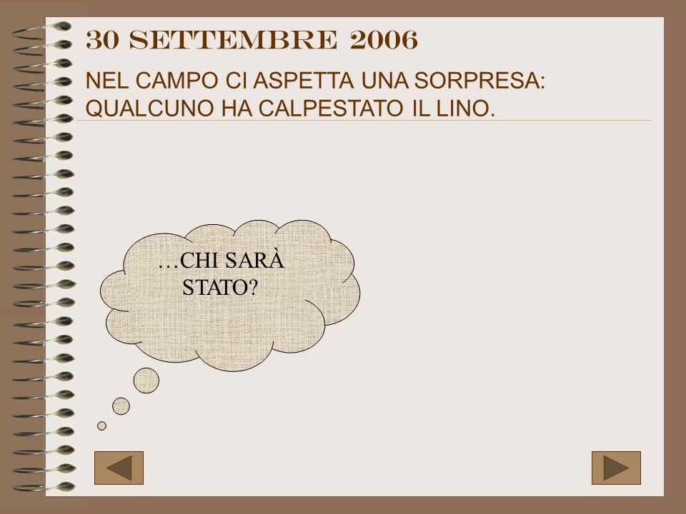 30 settembre 2006 NEL CAMPO CI ASPETTA UNA SORPRESA: QUALCUNO HA CALPESTATO IL LINO.