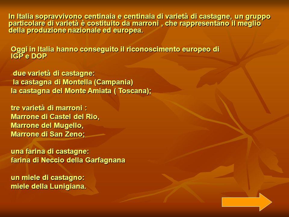 In Italia sopravvivono centinaia e centinaia di varietà di castagne, un gruppo particolare di varietà è costituito da marroni , che rappresentano il meglio della produzione nazionale ed europea.
