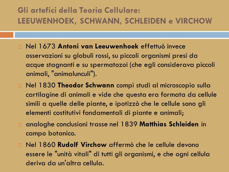 Gli artefici della Teoria Cellulare: LEEUWENHOEK, SCHWANN, SCHLEIDEN e VIRCHOW