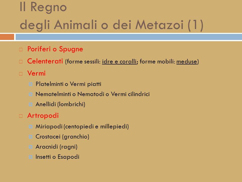 Il Regno degli Animali o dei Metazoi (1)