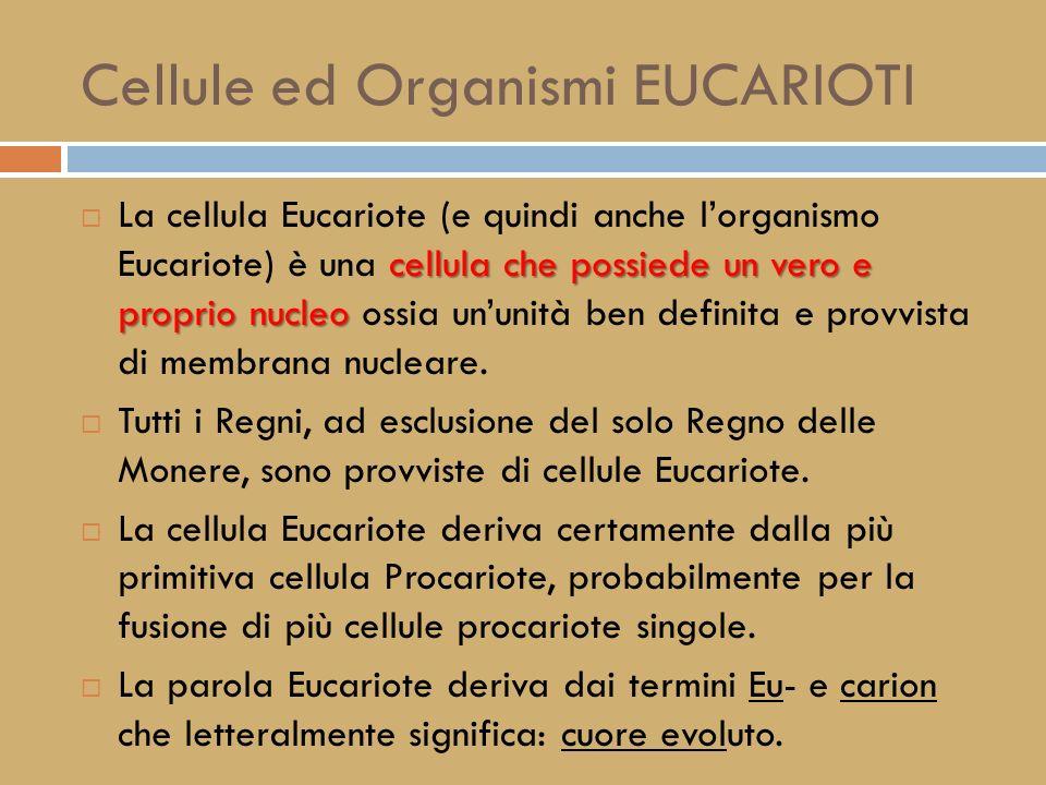 Cellule ed Organismi EUCARIOTI