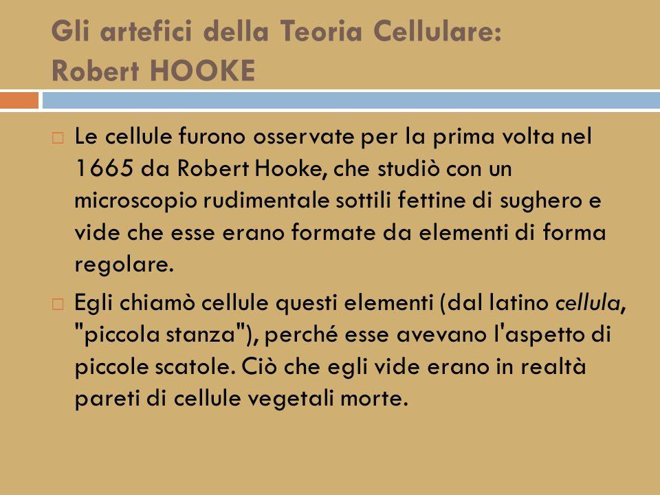 Gli artefici della Teoria Cellulare: Robert HOOKE
