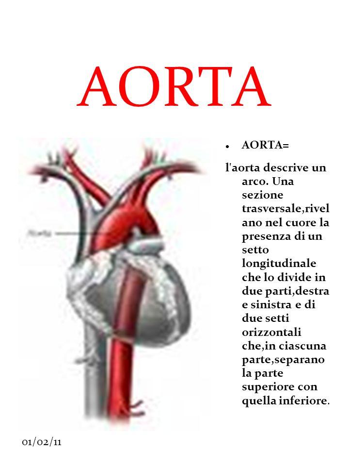 AORTA AORTA=