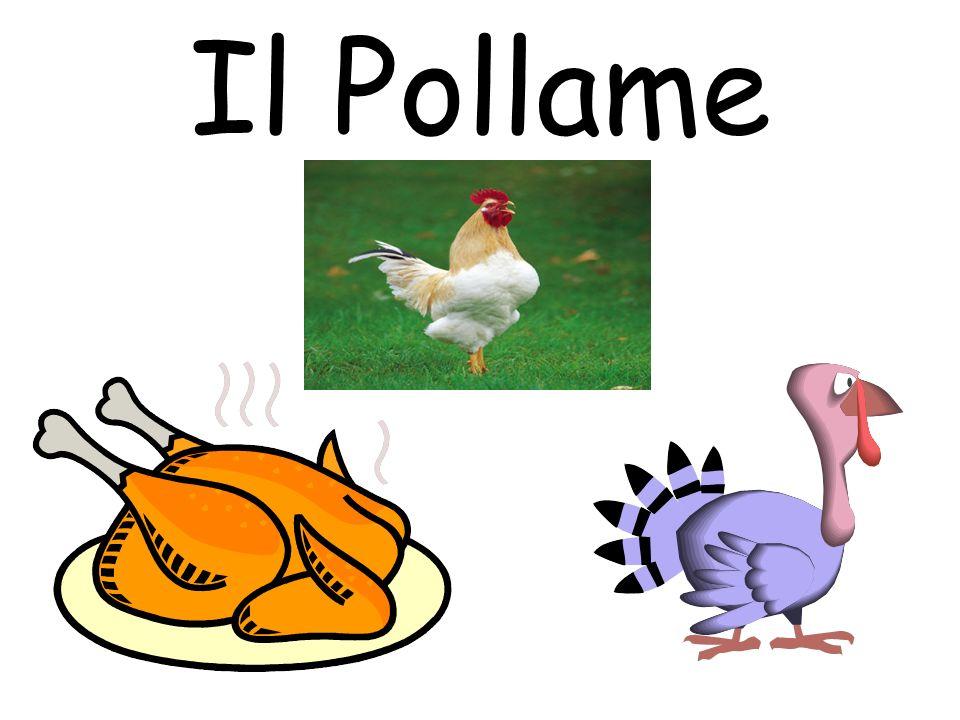 Il Pollame